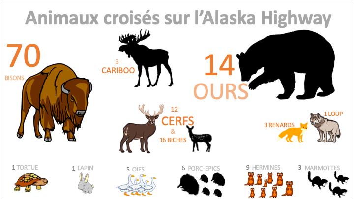 Animaux Alaska Highway